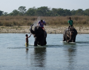 Elephant bath time (c) Shafik Meghji