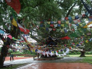 Lumbini prayer flags (c) Shafik Meghji